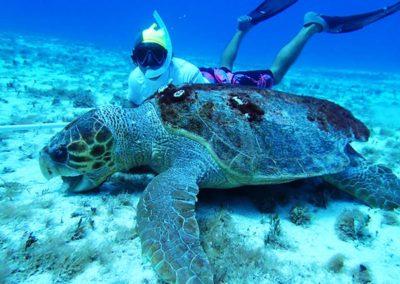 big-sea-turtle-in-cozumel-mexico