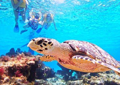 snorkel-cozumel-sea-turtle-medium